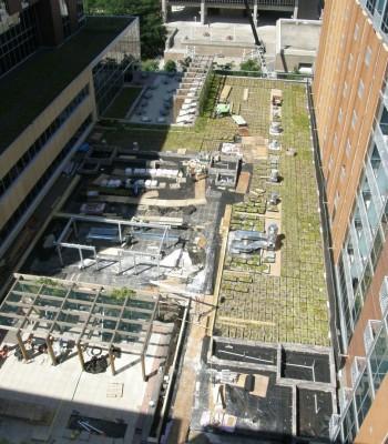 University Square – Lucky Green Roof Retrofit